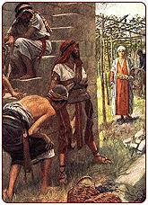 Vineyard Parable Christianity Christ