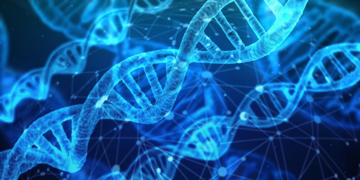 Homosexuality is Not Genetic Twin Studies DNA