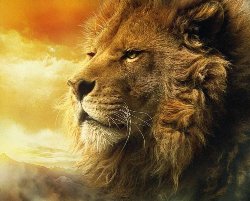 Animal Immortality: Do Animals Go to Heaven